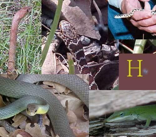 Herp_montage